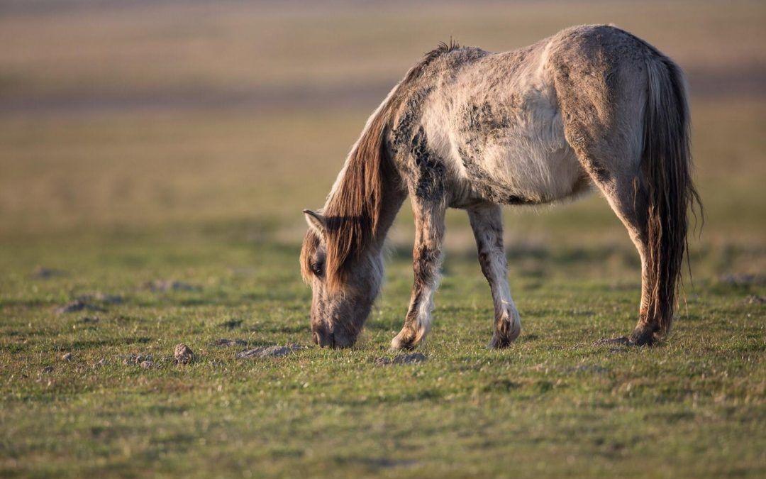 Tierschutzgesetz gilt auch für den NABU
